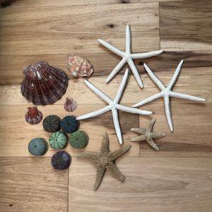 Other - Assorted starfish, shells & faux sea urchin shells